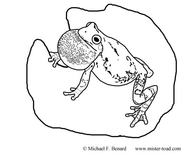 Gray Treefrog Coloring Page